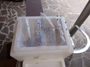 Froodies Lieferung Bild 2